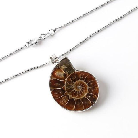 Ammonite Shell Necklace - Necklace