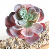 Colorful Artificial Succulent Plants Simulation Fake Cactus Planters Terrarium Pots Garden by Arcane Trail