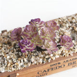 Purple Artificial Succulent Plants Simulation Fake Cactus Planters Terrarium Pots Garden by Arcane Trail