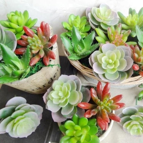 Green Artificial Succulent Plants Simulation Fake Cactus Planters Terrarium Pots Garden by Arcane Trail