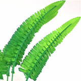 Large Fern Leaf Foilage - Plants