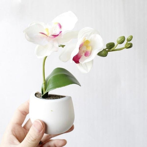 3D Artificial Orchid Fridge Magnet Magnetic Simulation Plants Planter Pots Flowers by Arcane Trail
