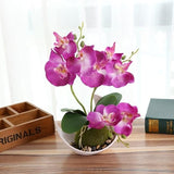 Potted Orchid - Purple - Plants