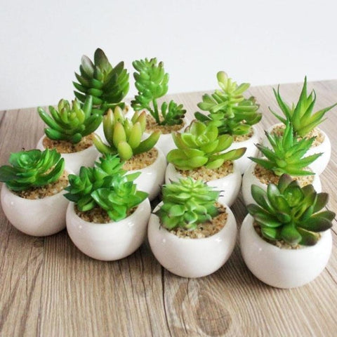 Green Artificial Potted Succulent Planter Pots White Ceramic Vase Simulation Fake Cactus Planters Terrarium Pots Garden by Arcane Trail