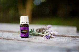 Lavender Essential Oil - 15 ml