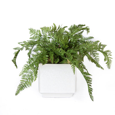 Large Fern Bundle