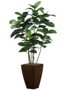 "Rubber Plant 52"" in Metal Pot"