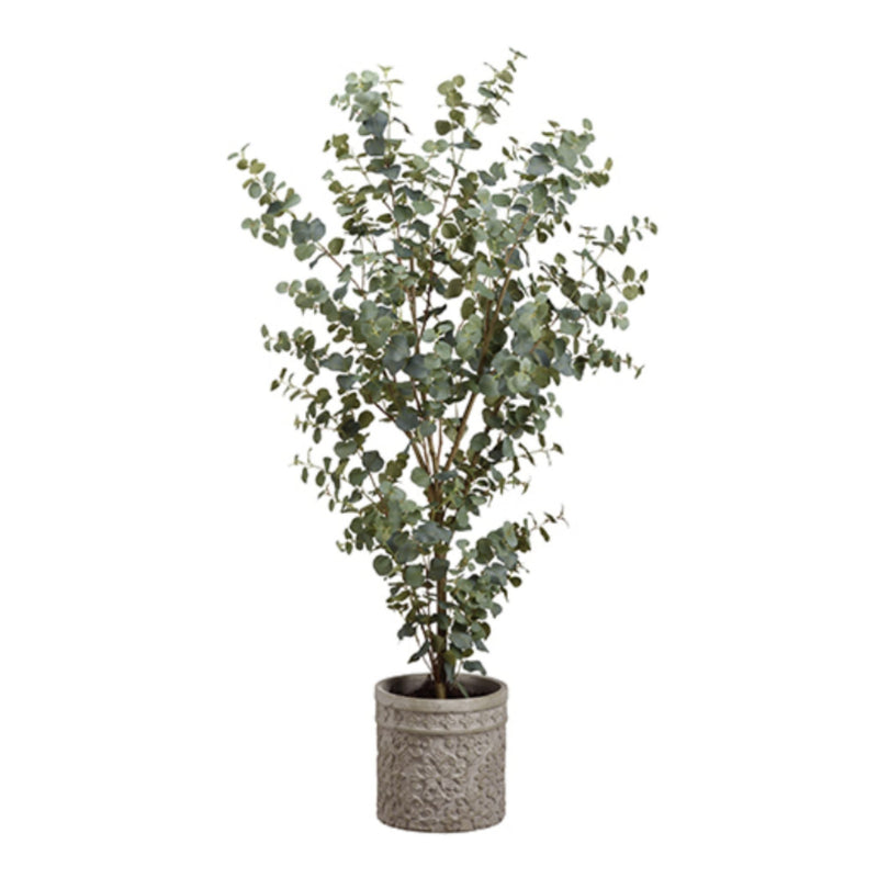 Eucalyptus 5' in Cement Planter