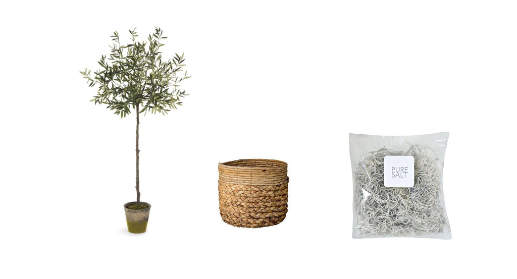Olive Tree Bundle