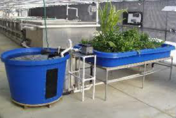 Creating An Aquaponic System