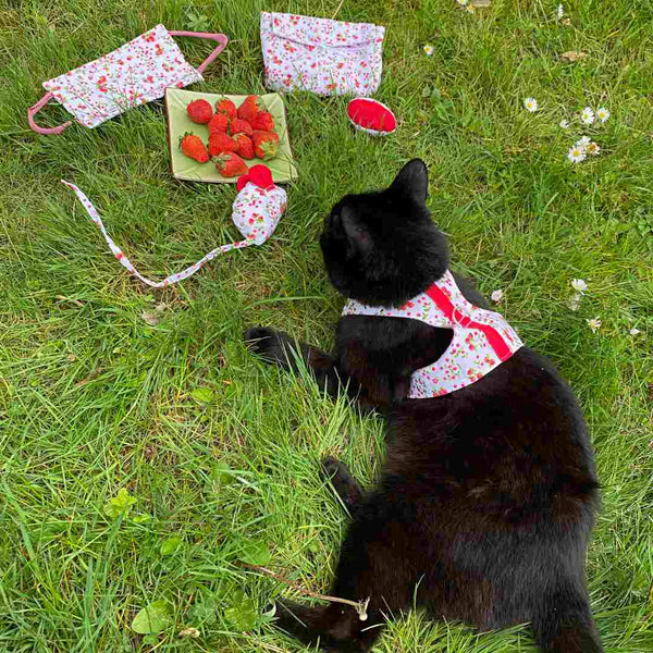 Harnais Fruits Rouges pour Chat et Chaton
