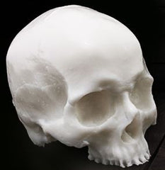 A Pound of Flesh Skull
