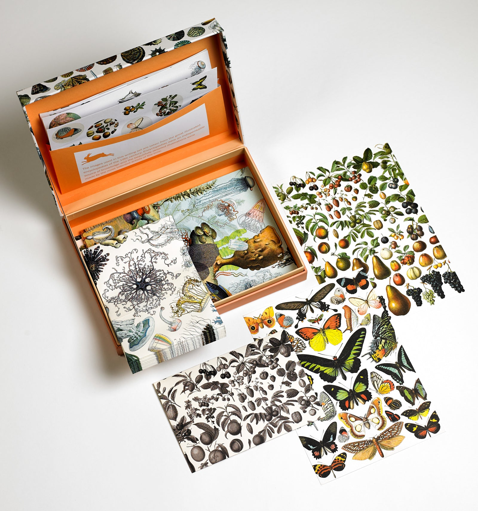 Natural History Pepin Boxed Stationery
