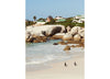 Boulders Beach Penguins, Cape Town 2 Vertical. Josh Welch Photography