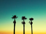 3 Palm Trees at Venice Beach