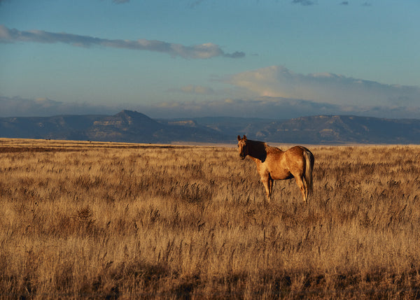 The Golden Horse, outside of Taos, NM, Josh Welch