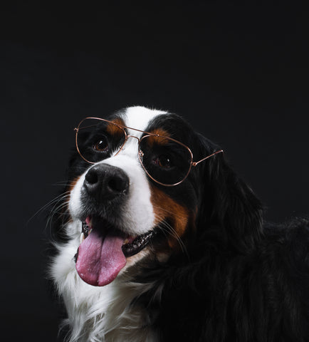 online pet store dog with glasses