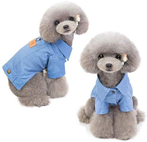 Vivid Dust Coat Colorful Denim Dog Jacket - Mia's Pet Supply