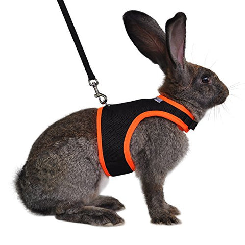 : Niteangel Adjustable Soft Harness with Elastic Leash for Rabbits (L, Orange) : - Mia's Pet Supply