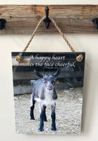 Cheerful Goat - Ropes