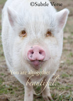 Beautiful Pig - Prints