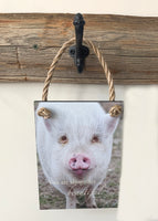 Beautiful Pig - Ropes