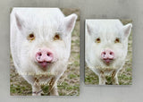 Beautiful Pig - Magnet and Deluxe Magnet