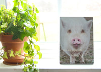 Beautiful Pig - Ready to Hang Plaque