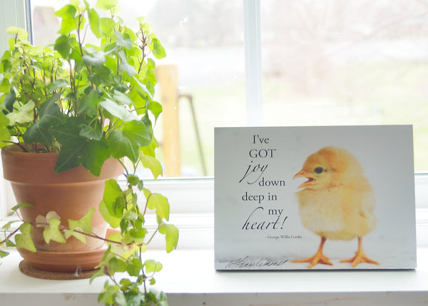 Chick - Ready to Hang Plaque