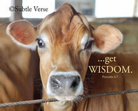 Get Wisdom Cow - Canvas Framed in Barn Wood