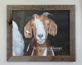 Oops - The Happy Goat framed in Barn Wood - 16x20