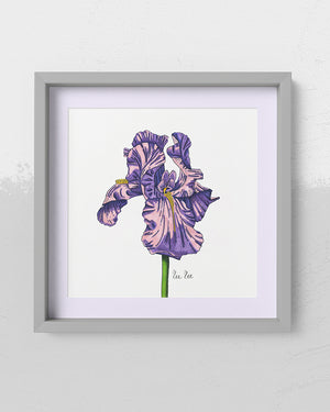 Iris Bloom Art Print