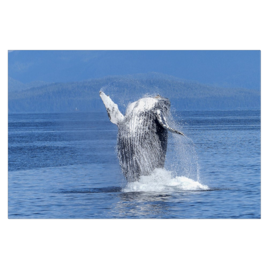 Jumping Whale Canvas Wrap
