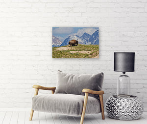 Lone Bison Canvas Wrap