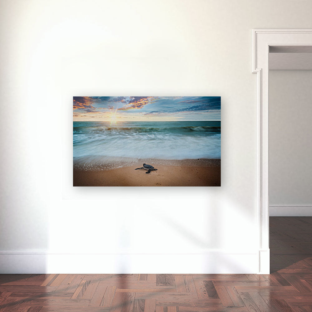 Baby Sea Turtle Canvas Wrap