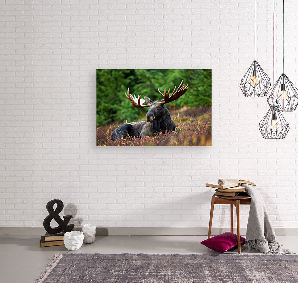 Lone Moose Canvas Wrap