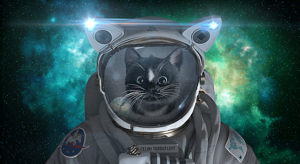 Felini Cat Space Hero