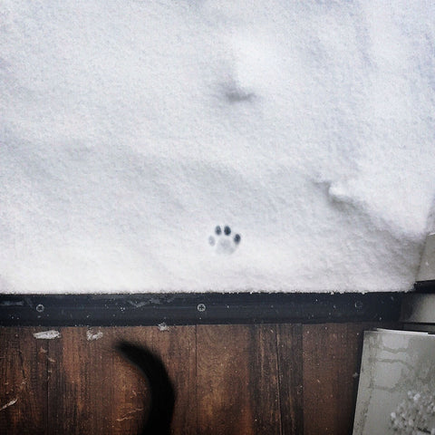 Single cat paw print in snow next to the doorstep, meaning the cat went back in as it does not like the cold snow - we can still see the black tail moving towards the inside of the house