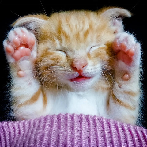 Cute sleeping kitten holding up pink paws