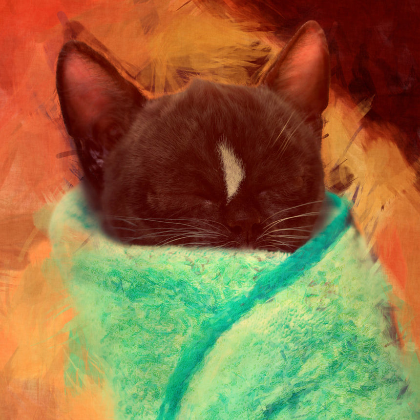 Free Felini Cat Wallpaper - Adorable Sleeping Purrito