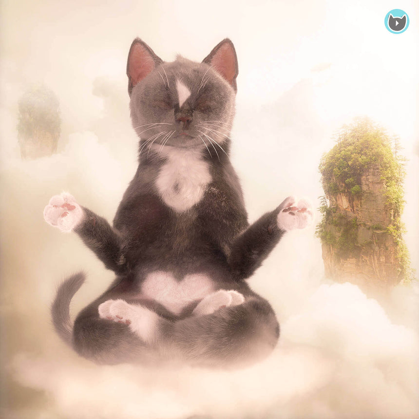 Felini the Kitty Free Wallpaper - Cat Meditation Floating in the Clouds in Yogi Sitting Position