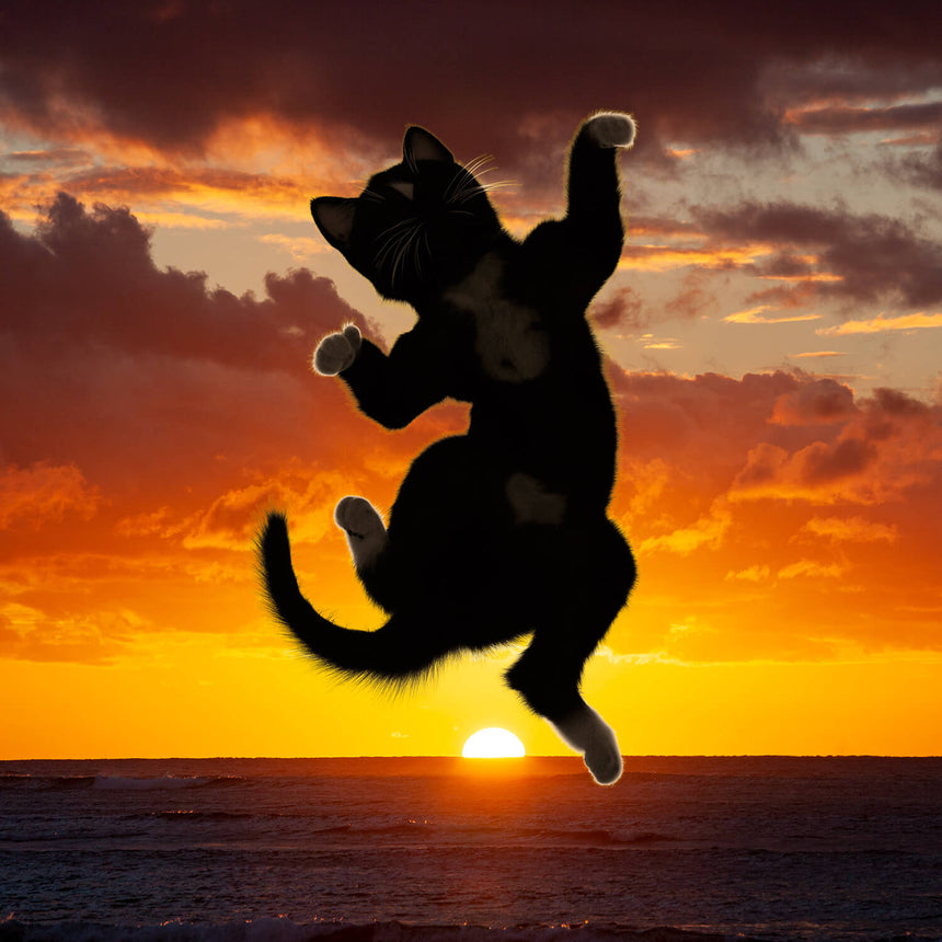 Free Felini Cat Wallpaper - Kitty Jumping in Front of a Beautiful Sunset