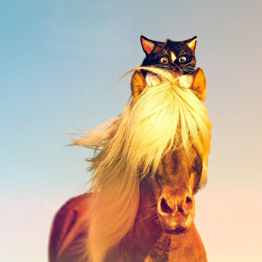 Free Felini Cat Wallpaper - Black Kitty Riding, Sitting on top of horse head