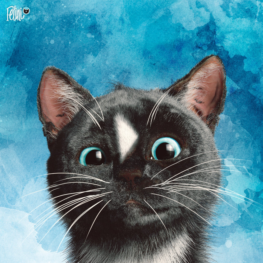 Free Felini Cat Wallpaper - Funny Kitty Peaking into view on blue background