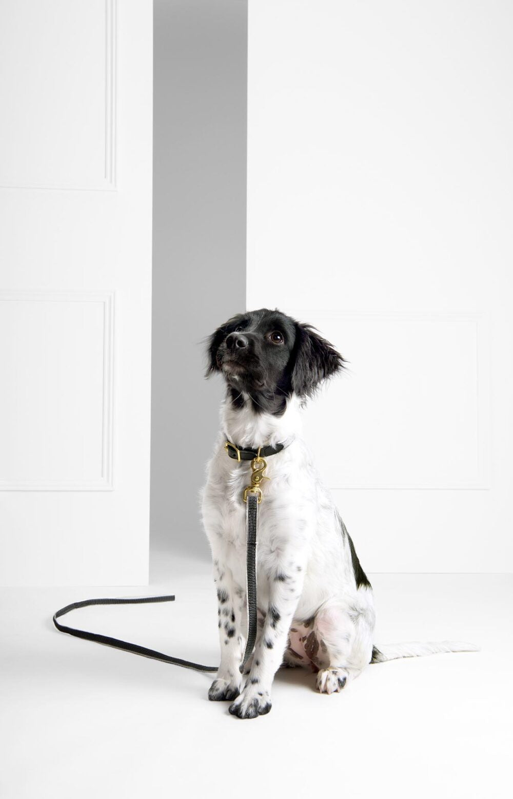 Black + Cream Chef L'Bark Standard Leash by See Scout Sleep