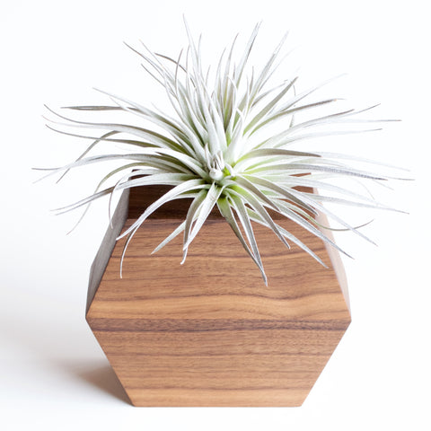 Hexagon Planter with Air Plant
