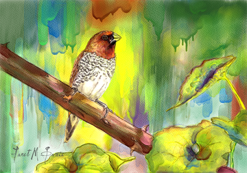 Digital Watercolor - Pinizon Canella Bird