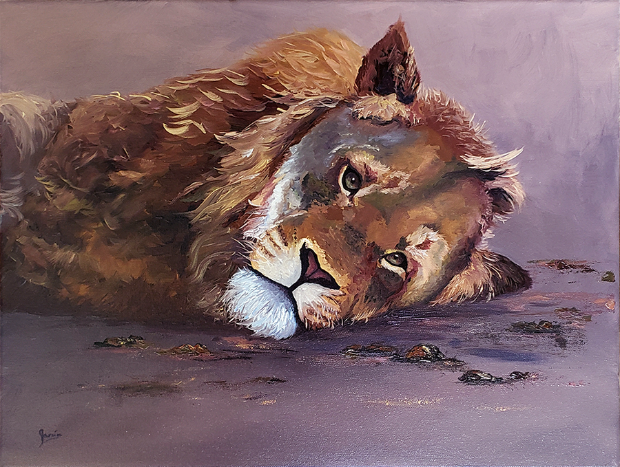 Resting Lion - Oil Painting