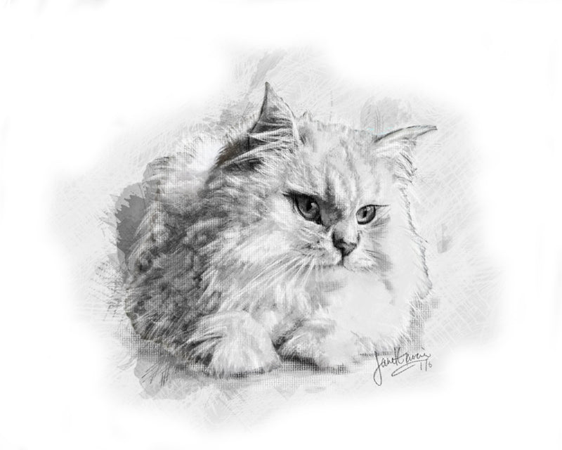 Charcoal Pet Portrait - Cat
