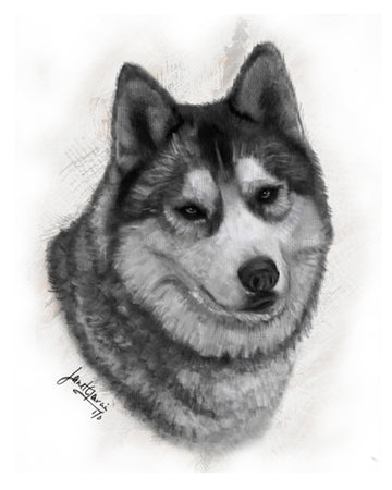 Charcoal Pet Portrait - Nikko